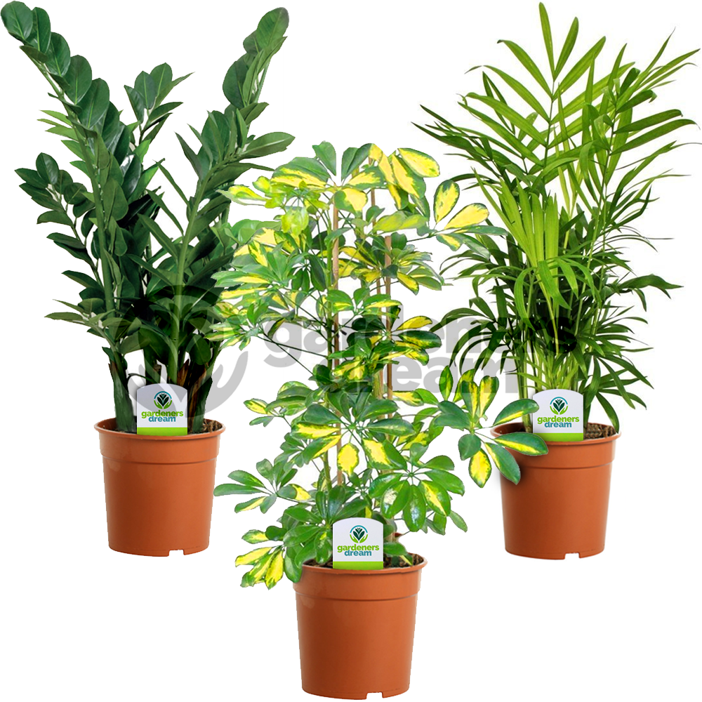 Indoor Plants For The Office Indoor Plant Mix 3 Plants House Office Live Potted Pot Plant Tree Mix A