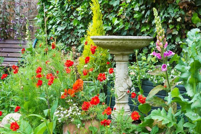 How To Design An Old Fashioned Cottage Garden Gardener39s