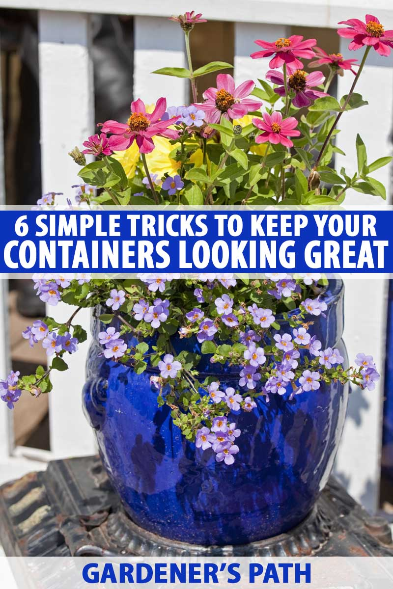 Simple Planters 6 Simple Tricks For Beautiful Garden Containers Gardener S Path