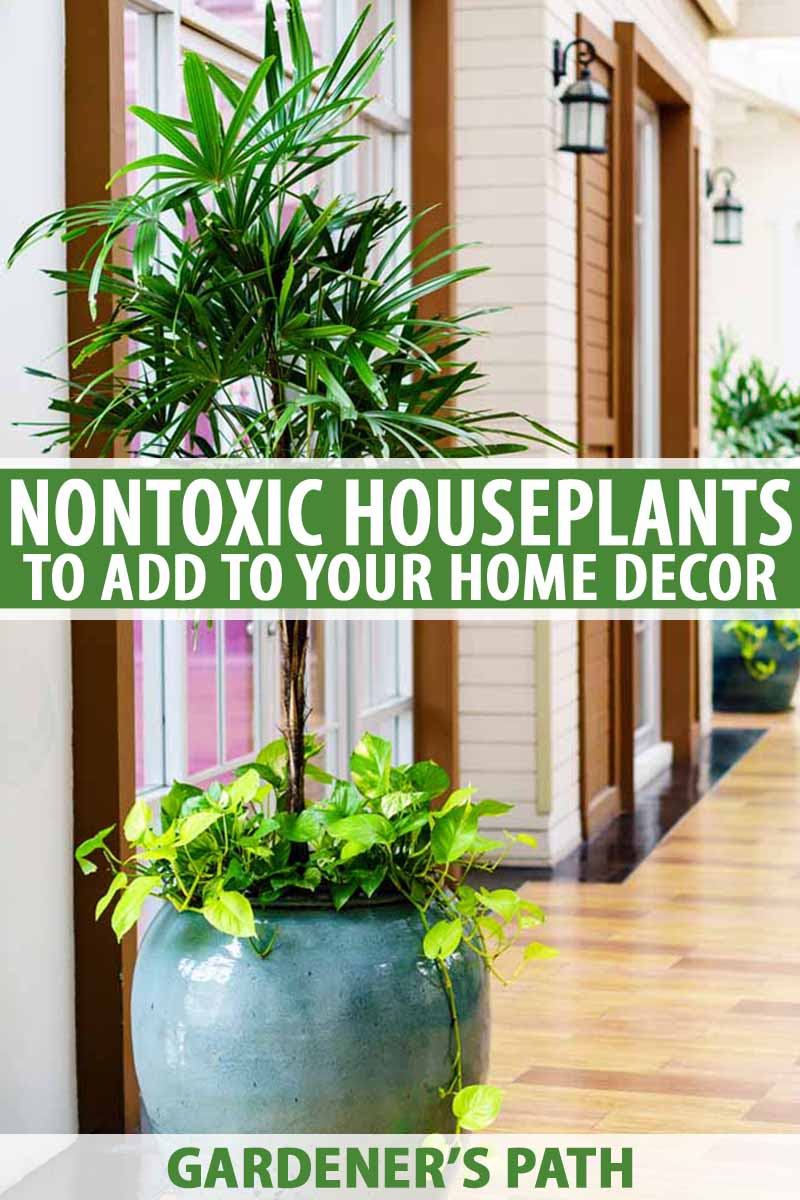Unusual House Plants For Sale Add These 5 Nontoxic Houseplants To Your Home Decor Gardener S Path