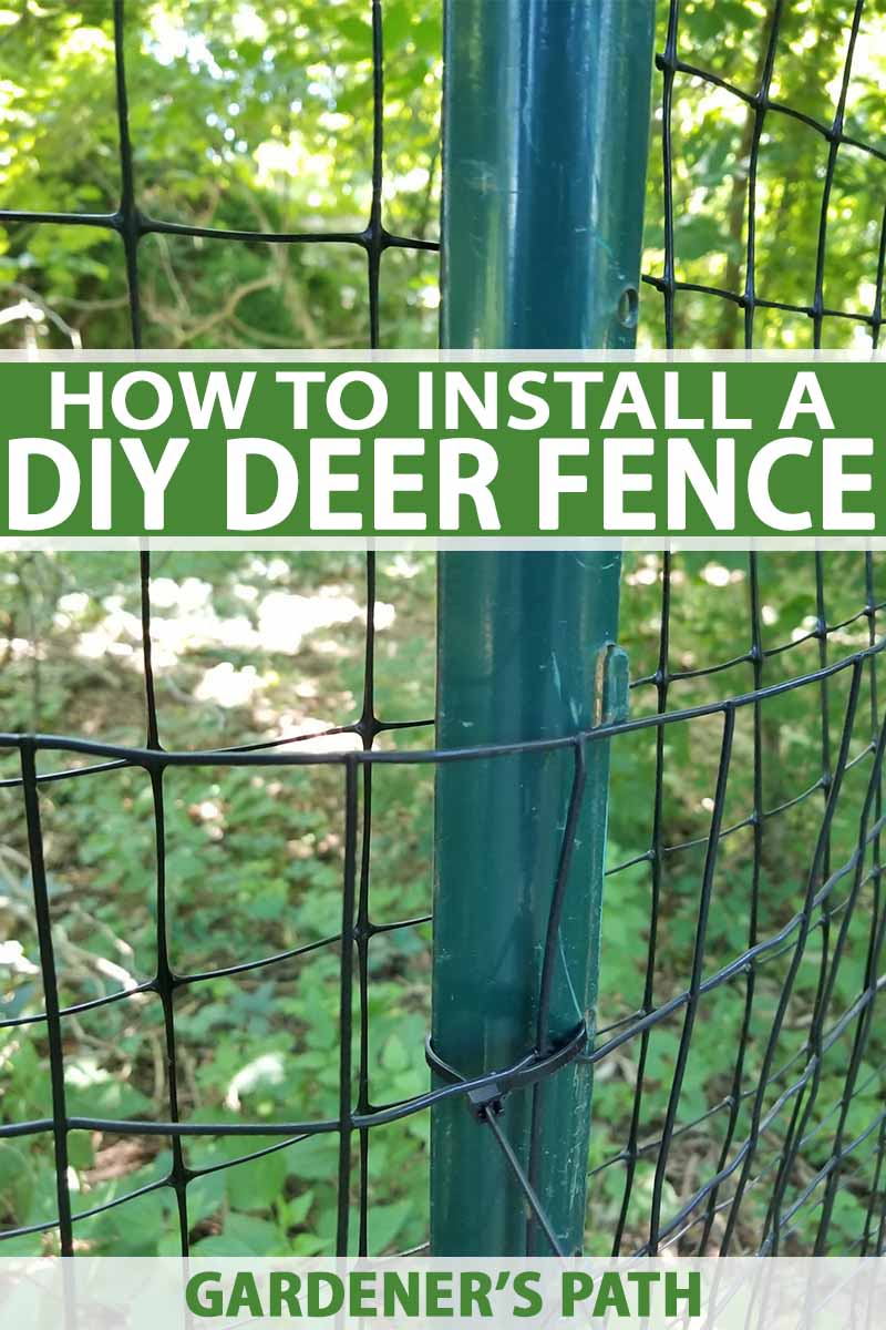 Wire Fencing How To Install A Deer Fence To Keep Wildlife Out Gardener S Path