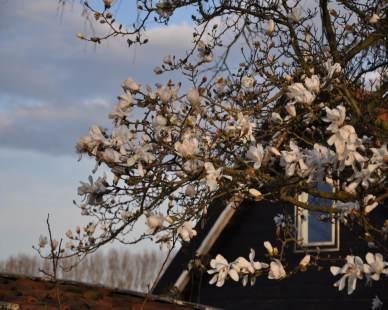 magnolia-schuur