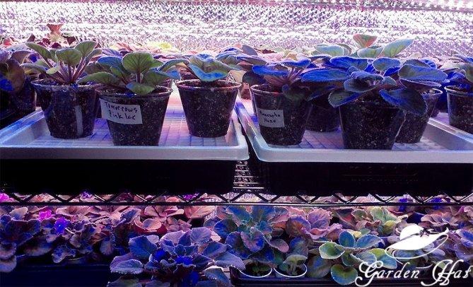 Leds for African Violet Shelves