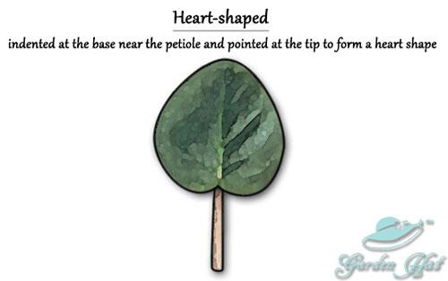 Garden Hat - African Violet Leaf Types - Heart-shaped