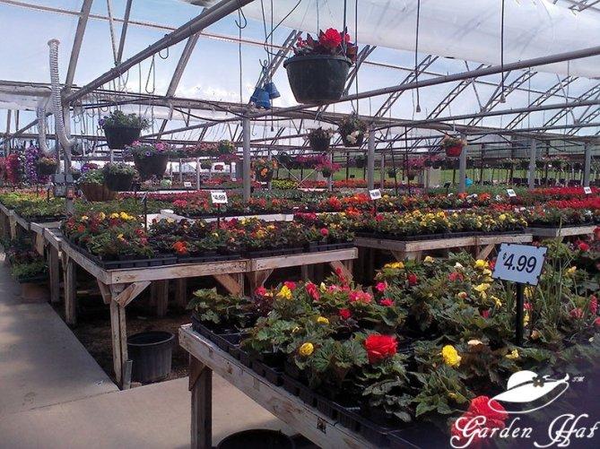 Garden Hat Adventures - Burlington Greenhouses