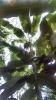 Garden_Hat_Garden_Adventures_Mitchell_Park_9_28