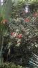 Garden_Hat_Garden_Adventures_Mitchell_Park_9_21