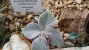 Garden_Hat_Garden_Adventures_Mitchell_Park_Desert_Dome_9_10