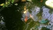 Garden_Hat_Garden_Adventures_Mitchell_Park_9_22