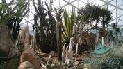 Garden_Hat_Garden_Adventures_Mitchell_Park_Desert_Dome_1