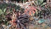 Garden_Hat_Garden_Adventures_Mitchell_Park_Desert_Dome_4