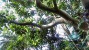 Garden_Hat_Garden_Adventures_Mitchell_Park_9_26