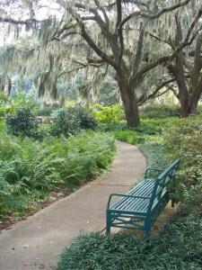 landscape trees live oak park morguefile