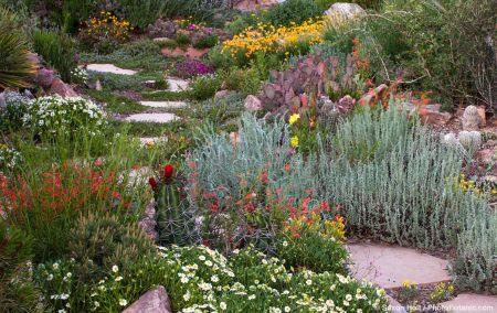 Xeric Rock Garden
