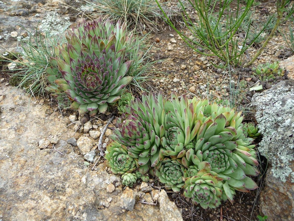 Entretien Succulente Succulent Garden Design Planning Growing And Care Of