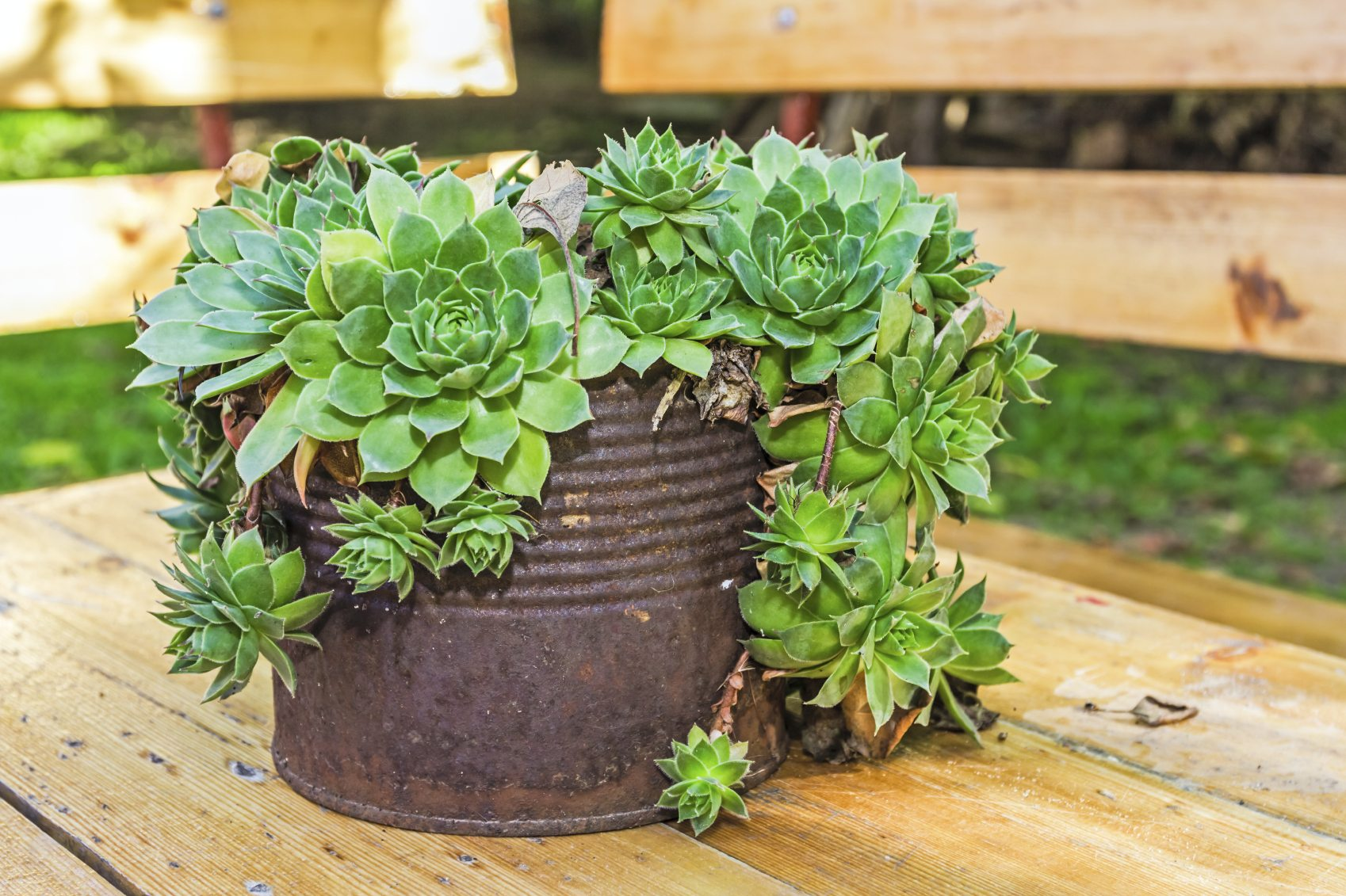 Cactus Planting Pots Creative Containers For Succulents Using Interesting