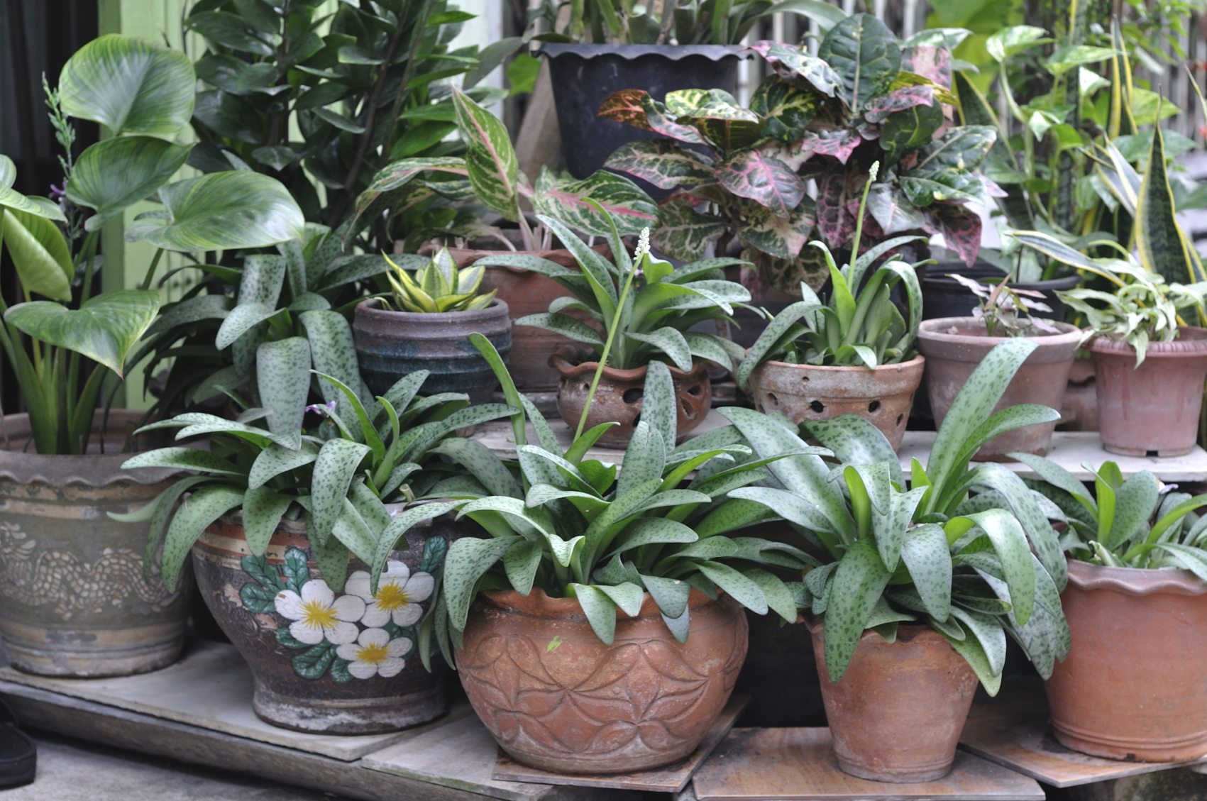 Indoor Pot Plants When To Bring In Potted Plants Tips On Bringing