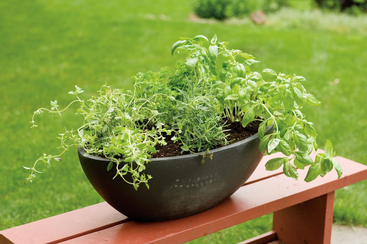 Herb Planter Pot Herbs That Grow Together In Containers What Herbs Will