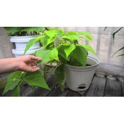 Reputable Container Gardening Youtube Container Gardening Soil Youtube Container Gardening Beans Veggies