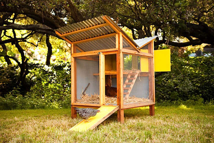 Sol Pvc Chevron 5 Favorites: Backyard Chicken Coops For Small Flocks