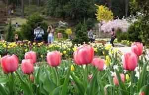 DealDash Tulips Garden