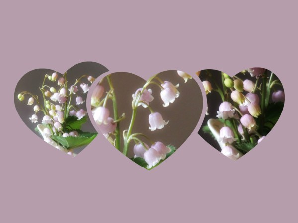 pink lily of valley