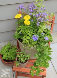 Plant a Mosquito-Repelling Container Garden to Protect ...