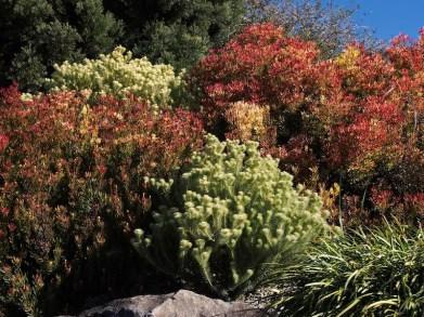 Blue Mountains Botanic Garden, Mount Tomah
