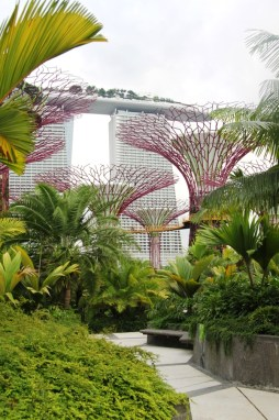 Supertrees in Singapore's Gardens by the Bay. Photo Louise McDaid