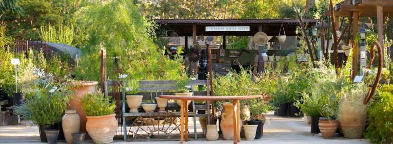 Australian Native Plants Nursery Ojai