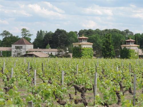 Historic Bordeaux vineyard