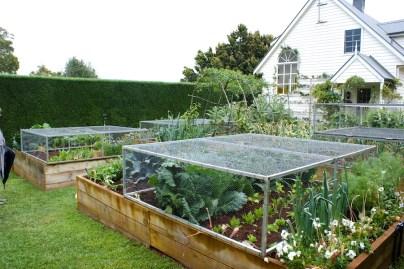 Vegetable garden in Lynwood Farm