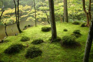 Saiho-ji Moss Garden, Kyoto