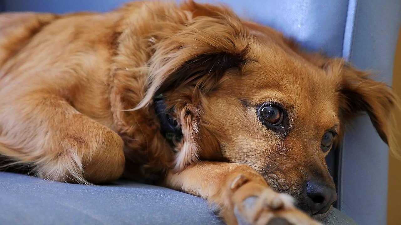 Fullsize Of Dog Runny Nose