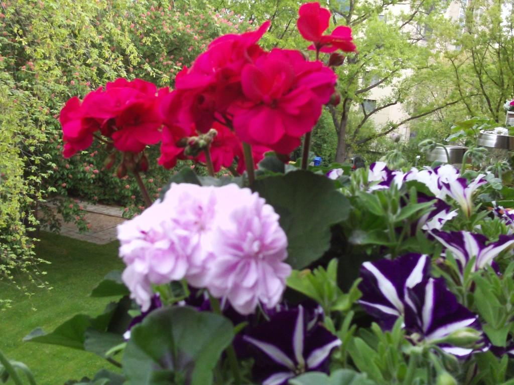 Balkonpflanzen Uberwintern Teichpflanzen Uberwintern Wohin Mit Den