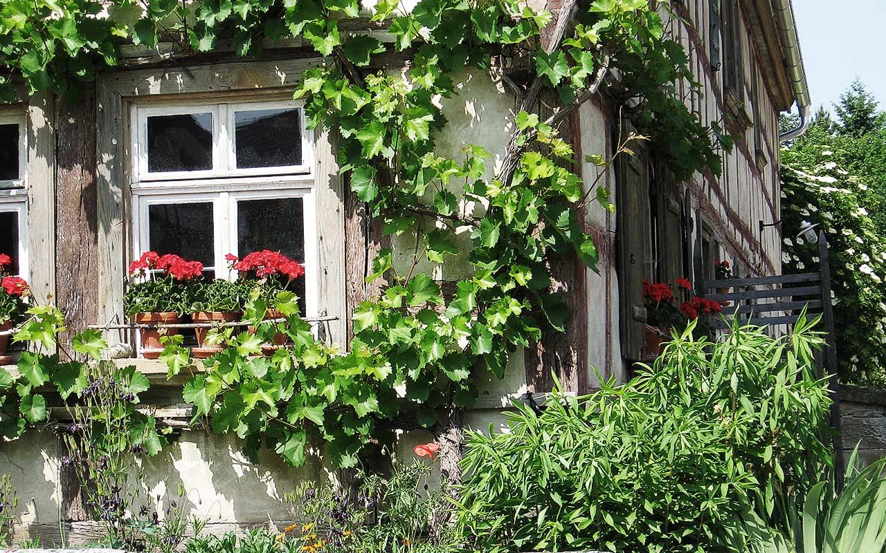 Balkonpflanzen halbschatten pflanzzensset einzelgrab for Balkonpflanzen fur halbschatten