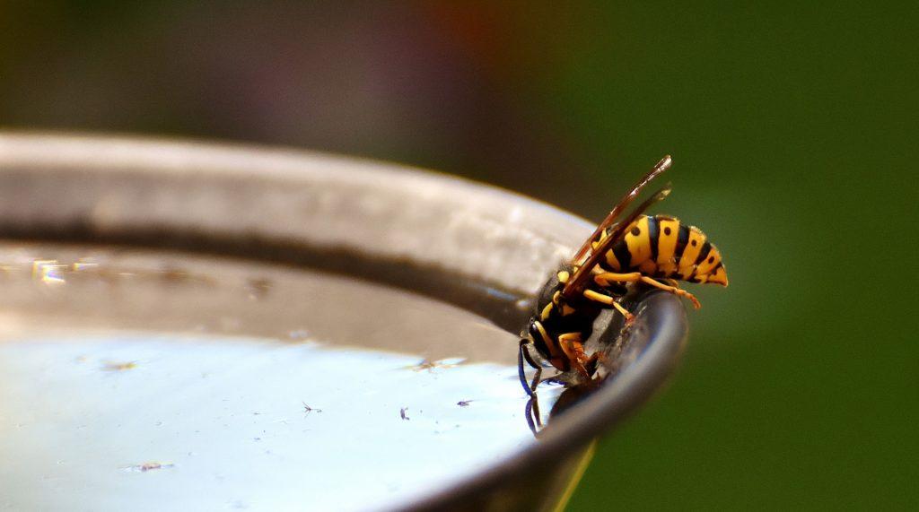 Trauermcken bekmpfen hausmittel perfect trauermcken for Kleine fliegen in blumenerde hausmittel