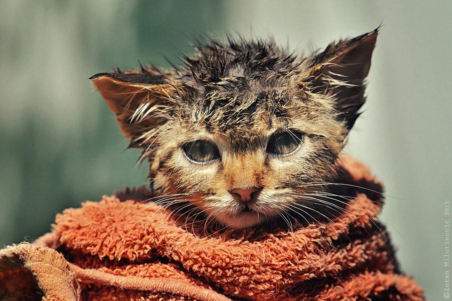 10 dicas para dar um banho mais tranquilo no seu gato