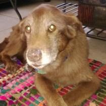 cocoa abandono adoção cães
