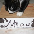 arranhador faca voce mesmo gatos