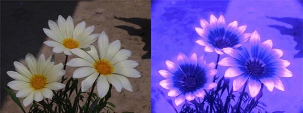 flores uv