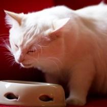 como escolher ração gato