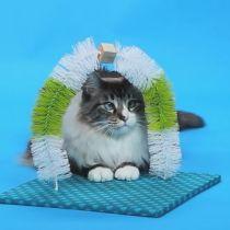 gatinho estacao de massagem