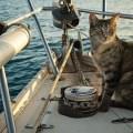 Gata adotada viaja o mundo com seus dois humanos4