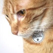importancia identificar animal estimacao cachorro gato