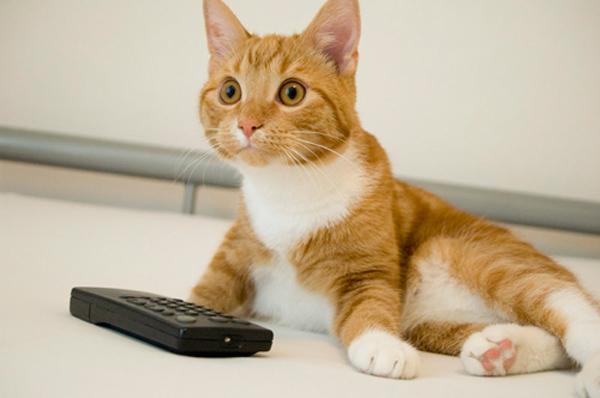 filmes-bonitinhos-assistir-com-seu-gato