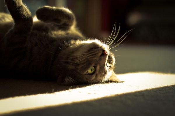 gatos dormir sol solzinho da manhã