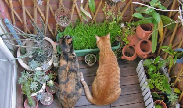 Plante um jardim sensorial para o seu gato gatinho branco Plantas seguras para gatos
