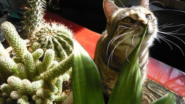 jardim-sensorial-plantas-gatos6