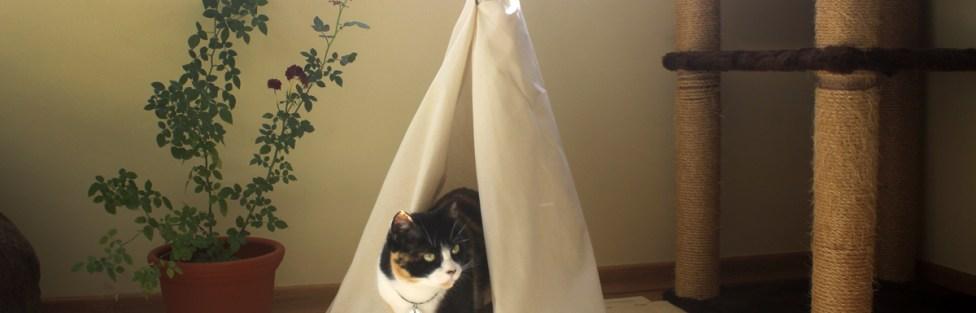 Como fazer uma tenda de índio para gatos